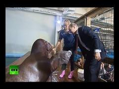 プーチン大統領セイウチ