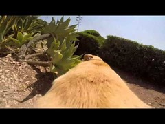 犬搭載カメラ