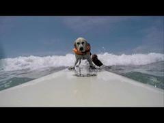 犬サーフィン