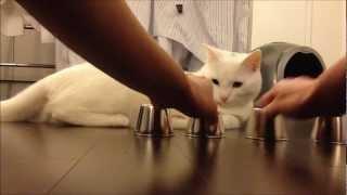 猫シェルゲーム