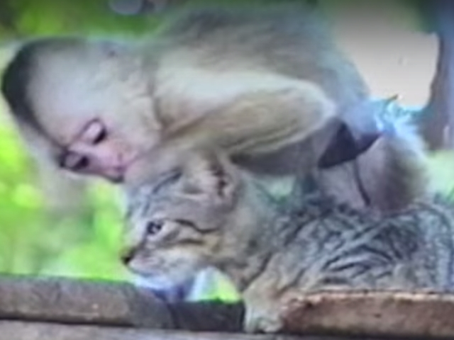 ネコ猿キス