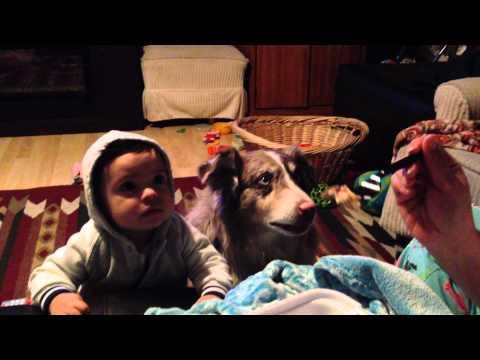 赤ちゃんママ犬