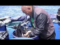 韓国中国違法漁船