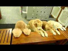 4匹の大型犬
