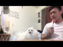 スイカを食べようとする飼い主と犬