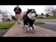 犬3Dプリンター義足