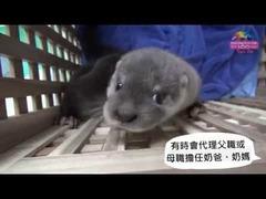 台北動物園カワウソ