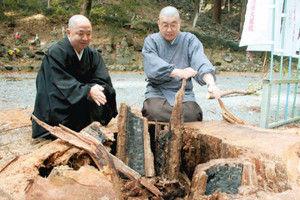 伐採した大木の切り株の内側から炭が見つかる 新パワースポットa