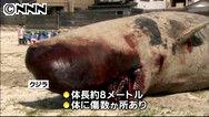 千葉 勝浦市 海岸 マッコウクジラ