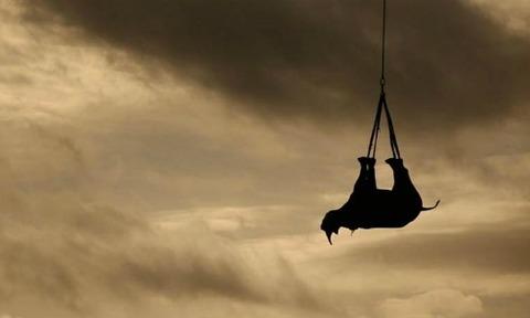rinoceronte-traslado1