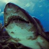 サメを絞め殺した漁師  漁師強い バキに出るレベル
