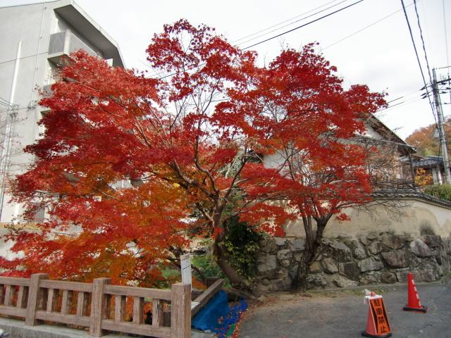 129備中松山城20101128 CIMG4704