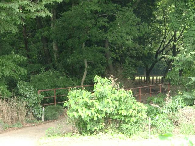 234久下田城20100626 CIMG7286