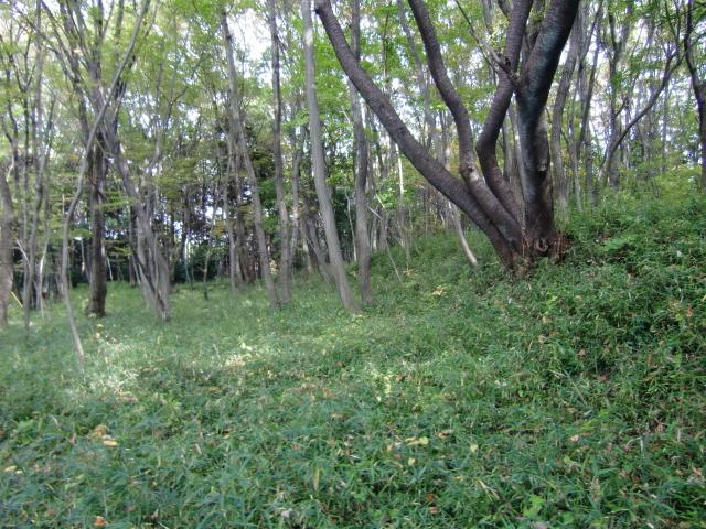 081滝山城20101113 CIMG3903