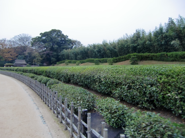 058岡山城20101130 CIMG5577