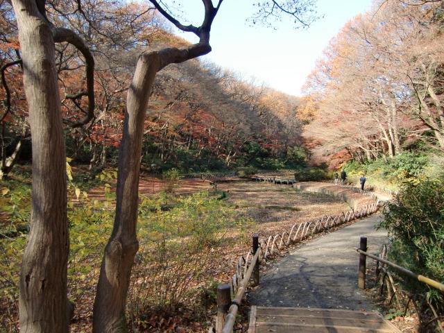 1305彦根藩下屋敷20101212 CIMG5801