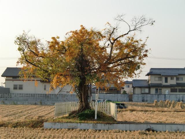 076備中高松城20101128 CIMG4476