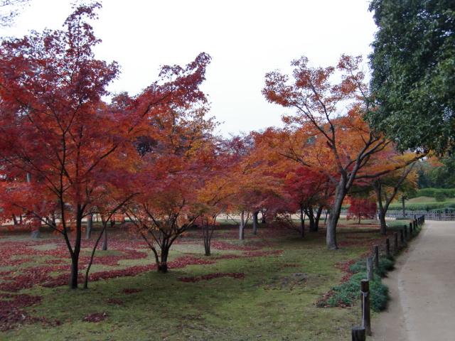 058岡山城20101130 CIMG5572