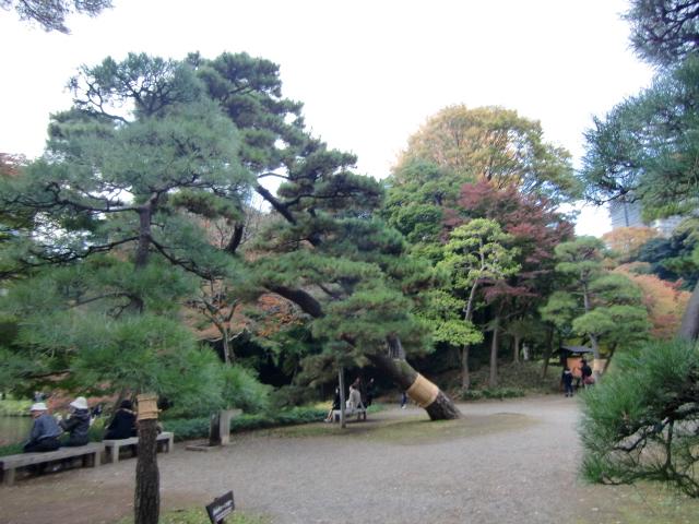 1306水戸藩上屋敷20101121 CIMG4307