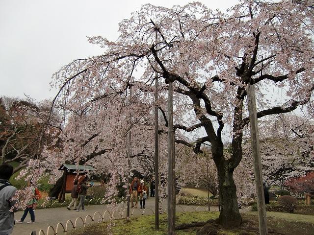 1306水戸藩上屋敷20120407 CIMG1603