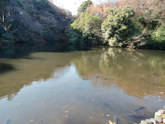 1305彦根藩下屋敷20101212 CIMG5803