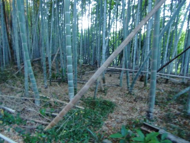 028二俣城20110110 CIMG7055