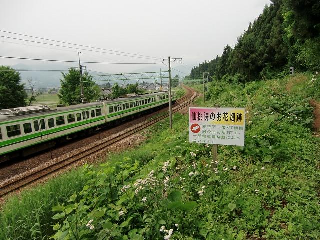 055樺沢城20110612 CIMG8880