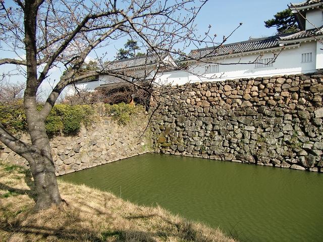 182岸和田城20120330 CIMG1510