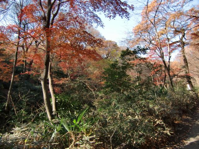 1305彦根藩下屋敷20101212 CIMG5799