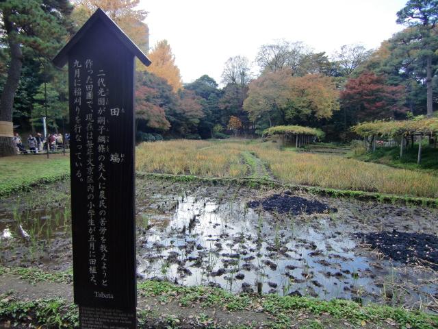 1306水戸藩上屋敷20101121 CIMG4300