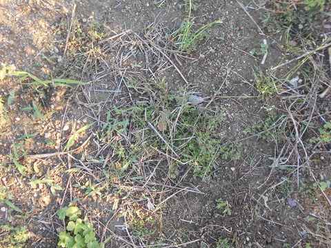 雨の後の草取りは、、、。