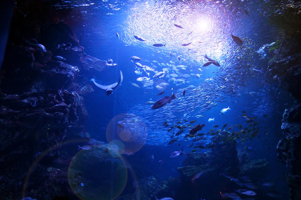 15_01_海底のイメージ