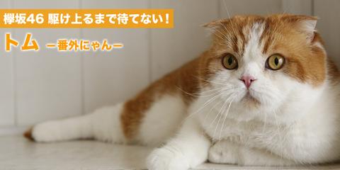 keyaki46_40_main_img