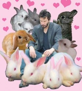 sad-keanu-with-bunnies-271x300