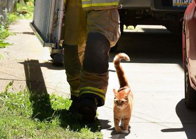 【画像】下りられなくなった猫、見かねて助けに行ったら…