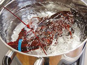 【スイス】 ロブスターを生きたまま茹でる調理法が禁止に 電気ショックによる気絶を義務づけ