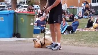 【動画】 散歩が終わるのが嫌で死んだフリする犬 最終的に飼い主が勝ち周りから拍手喝采