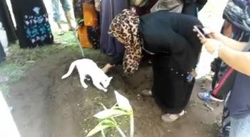 【動画】 飼い主の葬儀にやって来た猫 墓を掘り起こそうと試みる