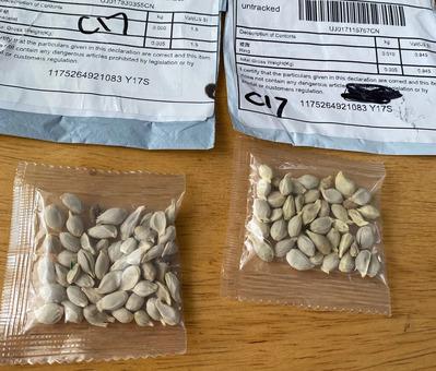 26xp-seeds-pix-jumbo (1)