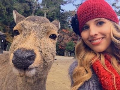Deer-Nara-Park-2
