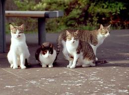 弱ったネコを保護しようとした女性が噛まれて死亡 西日本で、世界初