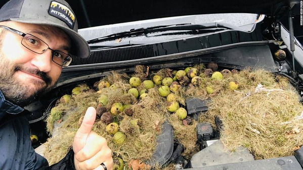 191008163622-01-walnuts-under-car-hood-super-169
