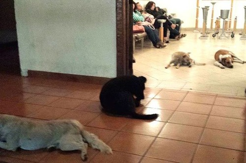 Stray-dogs-attend-funeral-of-lady-that-used-to-feed-them