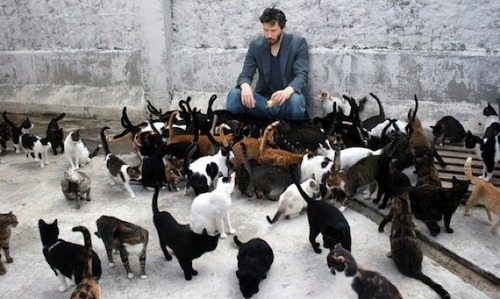 cheer_up_keanu_cats
