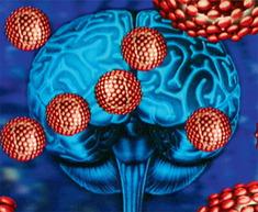「頭を悪くさせるウイルス」が自然界に存在し、44%の人が感染していた事が判明