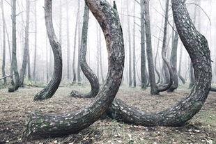 crooked-forest-krzywy-las-kilian-schonberger-poland-7