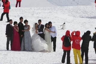 南極に中国人が殺到し環境破壊 「ペンギンに触れないで」という注意も無視