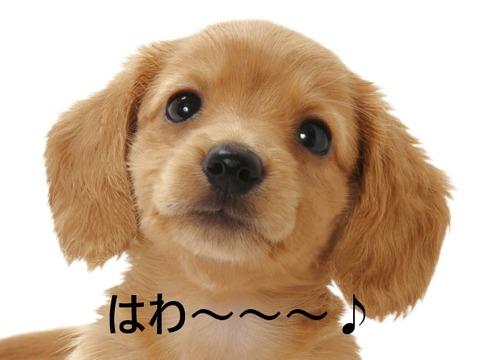 dogpino2