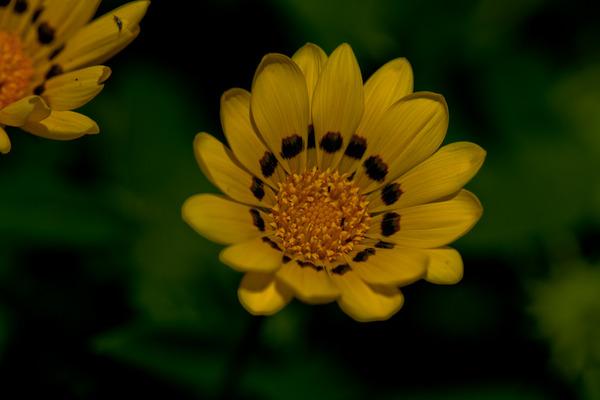 黄色い花1_LR3