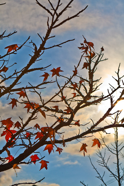 紅葉と青空と雲2